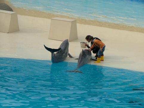 dolphins-gardaland-italy