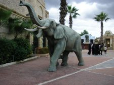 Elephant Tunisia